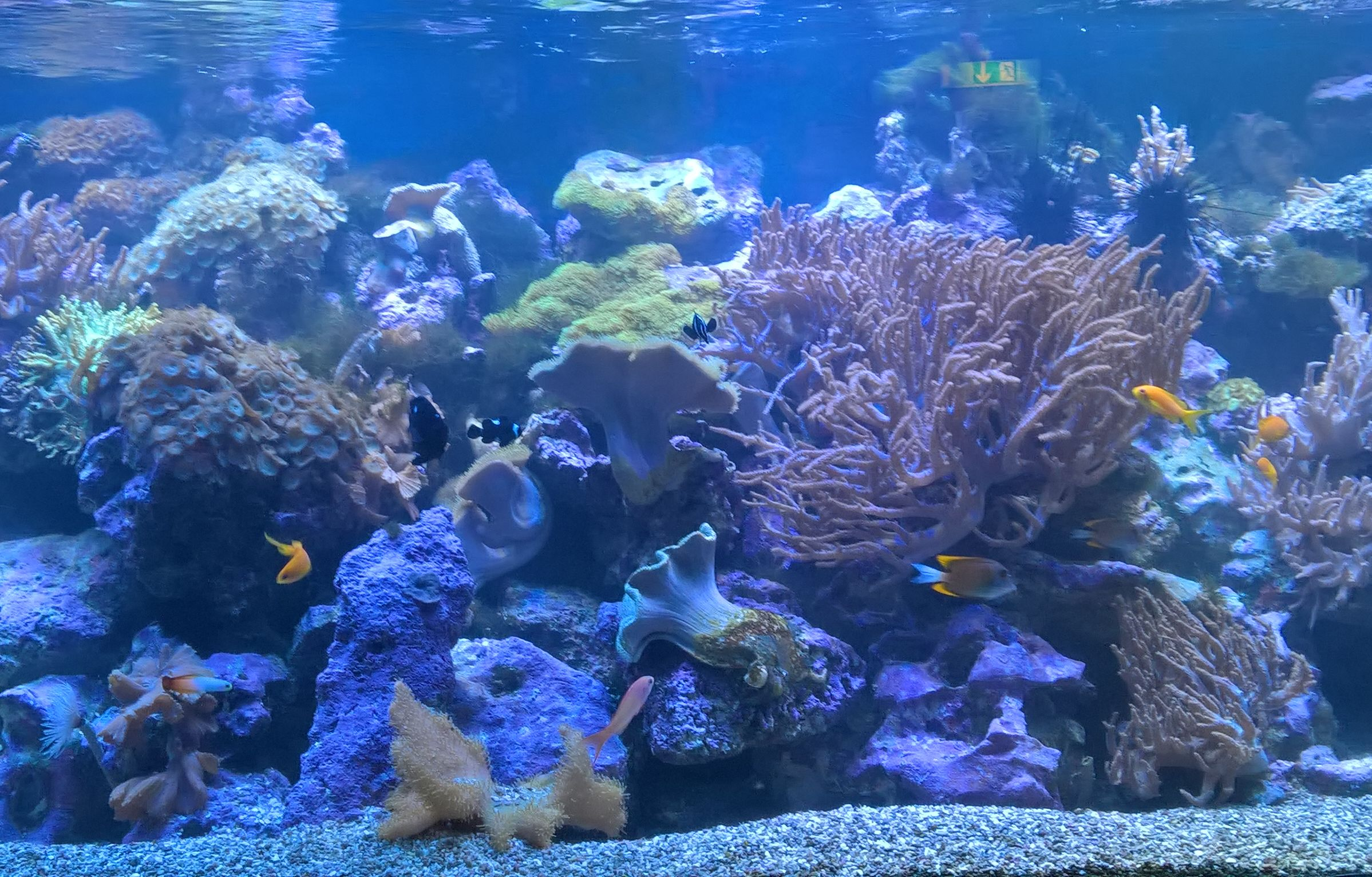 Betreuung eines Aquariums im Hospiz St. Elisabeth